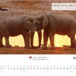 zukunft-afrika-ev-kalender-landschaften-tiere-2020-0005